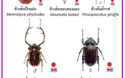 บัญชีชนิดสัตว์ป่าคุ้มครองตามพระราชบัญญัติสงวนและคุ้มครองสัตว์ป่า พ.ศ. 2562